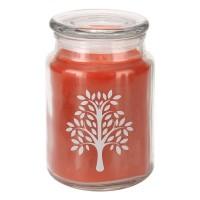 Apothecary Candle - Mango Cooler