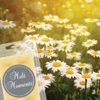Field of Daisies Melts--MAY SALE