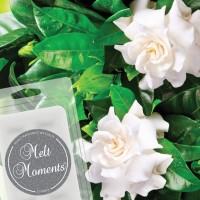 Gardenia Wax Melts — MAY SALE